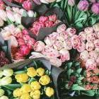 Виращивание цветов в Украине как бизнес