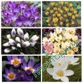 Крокус Botanical 1 15Ltr