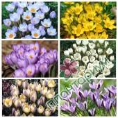 Крокус Botanical 2 15Ltr