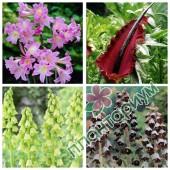 Микс Fritillaria,Dracunculus,Amaryllis 24Ltr