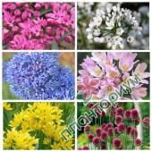 Мелкоцветковый микс Smallflowering 15Ltr